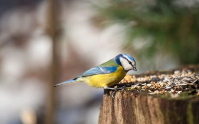 Have a go at birdwatching from home