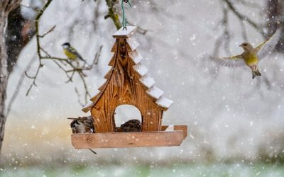 Bird-friendly treats for your feathered friends